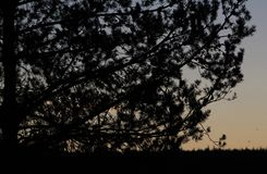 Silhueta da árvore do por do sol Imagem de Stock Royalty Free