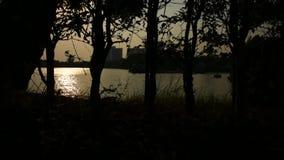 Silhueta da árvore e do por do sol vídeos de arquivo