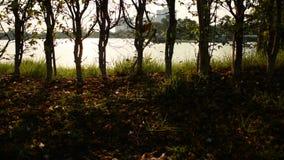Silhueta da árvore e do por do sol filme