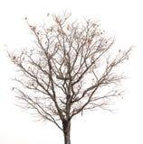 Silhueta da árvore e dos ramos Imagens de Stock Royalty Free