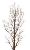 Silhueta da árvore e dos ramos Foto de Stock Royalty Free