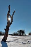 Silhueta da árvore inoperante Fotos de Stock