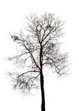 Silhueta da árvore inoperante foto de stock