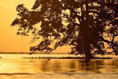 Silhueta da árvore inoperante Imagens de Stock Royalty Free