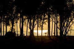 Silhueta da árvore inoperante Foto de Stock Royalty Free