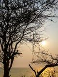 Silhueta da árvore inoperante sobre o mar com nascer do sol grande no backgro Fotos de Stock Royalty Free