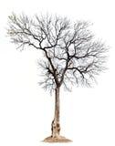 Silhueta da árvore isolada imagens de stock royalty free