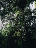 Silhueta da árvore na floresta Imagem de Stock Royalty Free