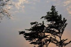 Silhueta da árvore no céu como as épocas crepusculares imagens de stock