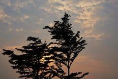 Silhueta da árvore no céu como as épocas crepusculares fotografia de stock
