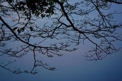 Silhueta da árvore no céu como as épocas crepusculares fotografia de stock royalty free