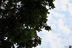 Silhueta da árvore no céu como as épocas crepusculares foto de stock
