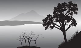 Silhueta da árvore no lago Fotografia de Stock