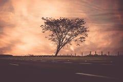 Silhueta da árvore no por do sol Fotos de Stock Royalty Free