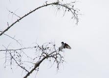 Silhueta da andorinha da árvore no grande contraste muito preto e branco imagens de stock royalty free