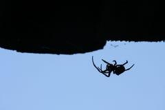 Silhueta da aranha fotografia de stock