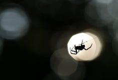Silhueta da aranha em uma Web Imagens de Stock