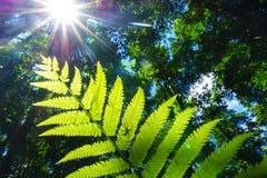 Silhueta da aranha na folha verde da samambaia com a luz que passa completamente, Fotografia de Stock Royalty Free