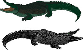 Silhueta da cor e do preto do crocodilo Imagens de Stock Royalty Free