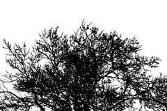 Silhueta da coroa natural de ramos desencapados secos do pinheiro Vetor eps10 ilustração stock