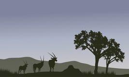 Silhueta da família do antílope nos montes Fotografia de Stock Royalty Free