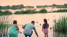 A silhueta da família nova está andando no parque no verão, por do sol, olhando ducks no lago, conceito da natureza video estoque