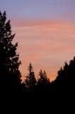 Silhueta da floresta no por do sol imagens de stock