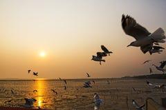 Silhueta da gaivota do grupo Imagens de Stock