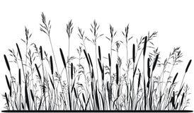 Silhueta da grama de prado Imagem de Stock