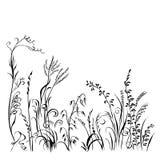 Silhueta da grama e das flores isolada no fundo branco Imagens de Stock