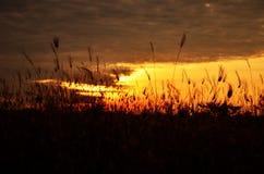 Silhueta da grama no por do sol Imagem de Stock