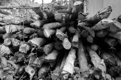 Silhueta da madeira da teca Fotografia de Stock Royalty Free