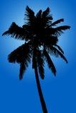 Silhueta da palma de coco isolada no fundo azul Foto de Stock Royalty Free