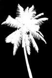 Silhueta da palma de coco isolada no preto Imagens de Stock Royalty Free