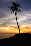 Silhueta da palma de coco sob o céu do por do sol Fotos de Stock Royalty Free