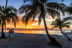 Silhueta da palma no por do sol imagens de stock royalty free
