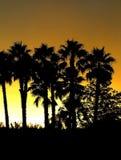 Silhueta da palmeira Fotos de Stock Royalty Free