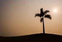 Silhueta da palmeira Imagens de Stock Royalty Free