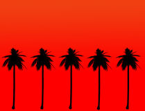 Silhueta da palmeira do coco Fotografia de Stock Royalty Free