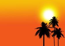 Silhueta da palmeira do coco Foto de Stock
