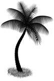 Silhueta da palmeira em um branco Fotografia de Stock