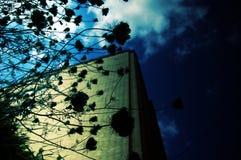 Silhueta da planta Imagens de Stock
