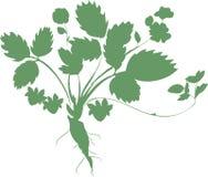 Silhueta da planta de morango Imagens de Stock