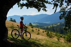 Silhueta da posição profissional do ciclista do desportista com a bicicleta no monte gramíneo perto da árvore grande imagem de stock royalty free