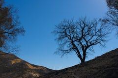 Silhueta da árvore queimada Fotografia de Stock Royalty Free