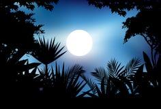 Silhueta da selva da beleza Imagem de Stock Royalty Free