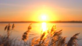Silhueta da terra arrendada da mão da mulher e do avião de papel throwsing no fundo da paisagem do lago da água no por do sol ver filme