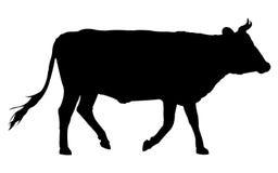 Silhueta da vaca Foto de Stock Royalty Free
