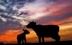Silhueta da vaca e da vitela Fotos de Stock Royalty Free