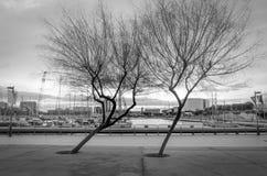 Silhueta das árvores Fotos de Stock